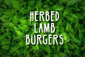 herbed lamb burgers